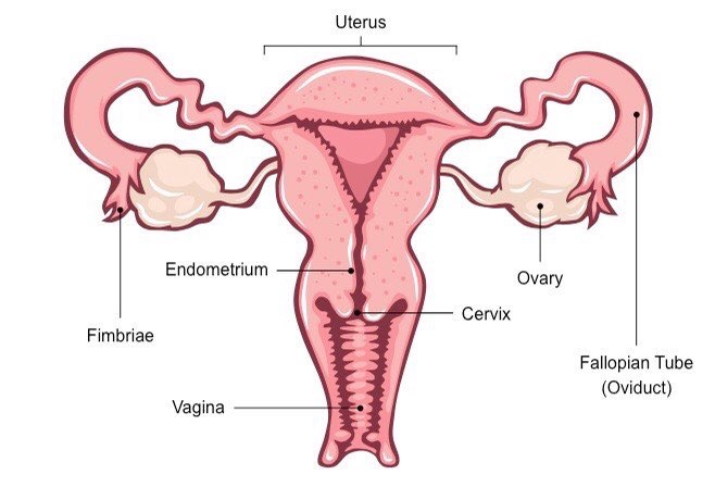 Sexual intercourse after ectopic pregnancy